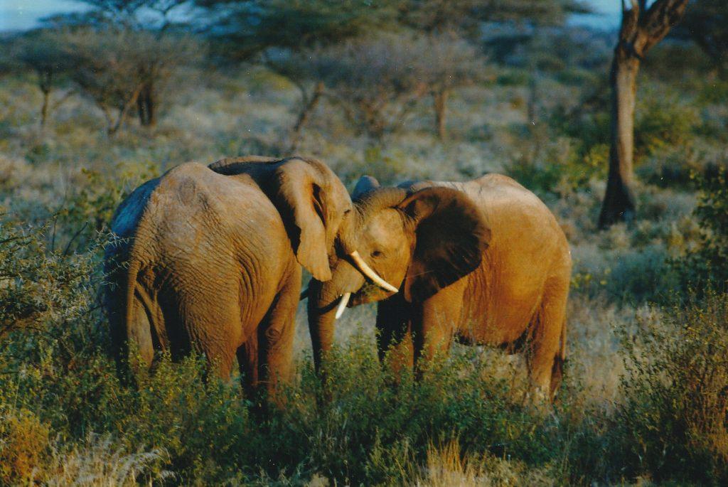 Olifanten worden in India als Godheid Ganesha gezien