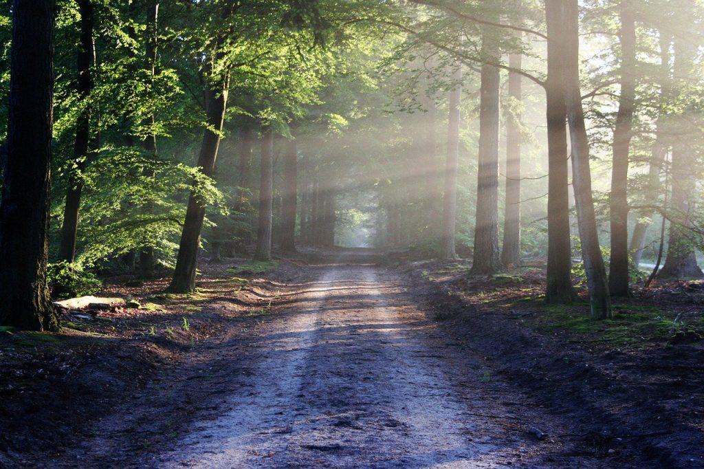 De weg naar vrijheid en blijheid door Vedische Astrologische lezingen