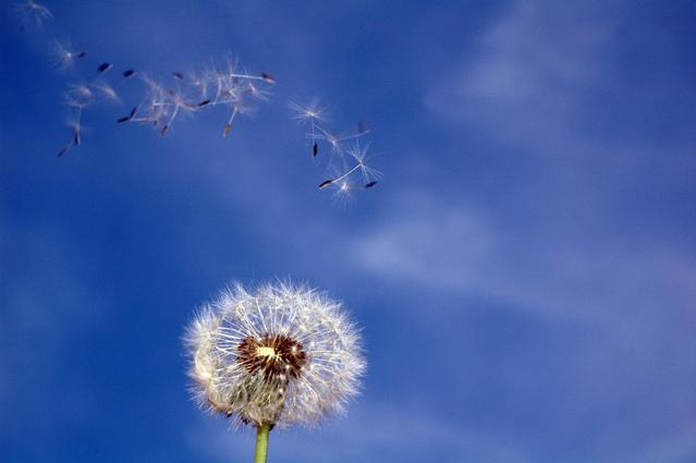 Blown with the wind like data dosha